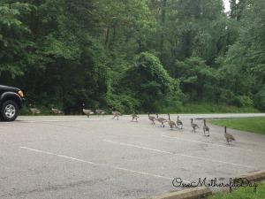 duckscrossingroadusethisone